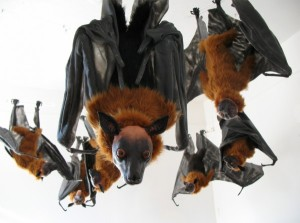 {Roost} An installation of ten Indian Flying Foxes. 2009