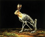 "{Lepus europaeus: European Hare} oil on wood, 39"" w x 32"" h, 2000"
