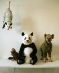 {Virginia opossum, marmoset, giant panda, spotted hyena} 2009