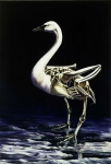 "{Cygnus buccinator: Trumpeter Swan} oil on wood, 40"" w x 58"" h, 2001"