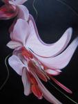 Moth Orchid II
