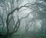 Untitled (Woods 1), 2010 Pigment print on paper